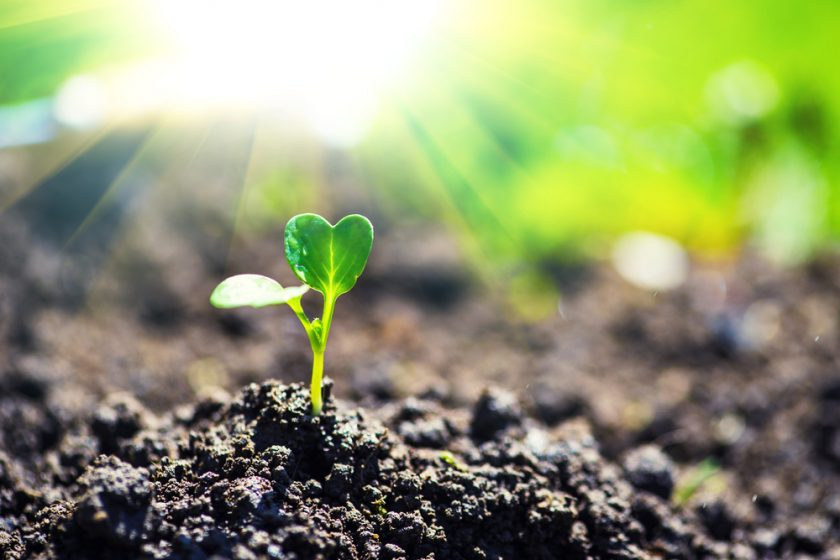 50 Inspirational Quotes for Joy & Abundance